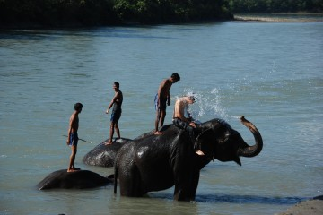 Chitwan Jungle Safari (Explore Wilderness)