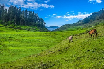 Khaptad National Park Trek(Hidden Gem)